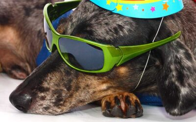 Dog Photo Contest Winners Find Fame