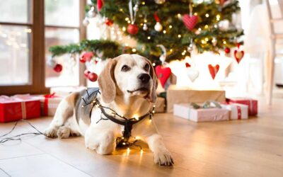 Protect Your Furry Friend from These Common Holiday-Related Risks