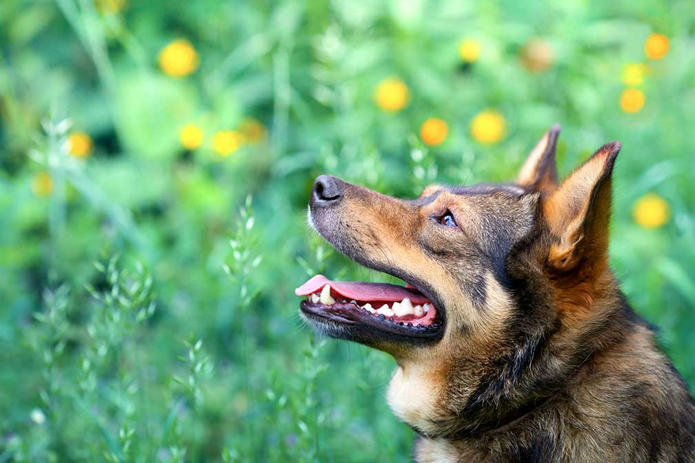 Is Love an Emotion Dogs Can Smell?
