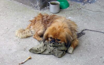 ASPCA Estimates 19.2 Million Pets Living in Households at Risk of Eviction or Foreclosure Due to COVID-19 Crisis