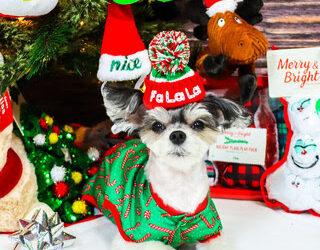 PetSmart Celebrates the Season of Spoiling with Virtual Santa Photos and Sweepstakes