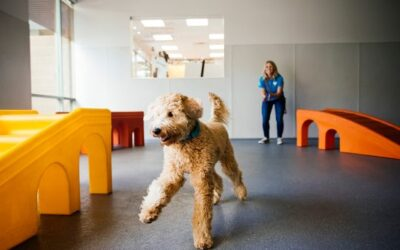 Dogtopia Ranks 12th on the Franchise Times Annual Fast & Serious List